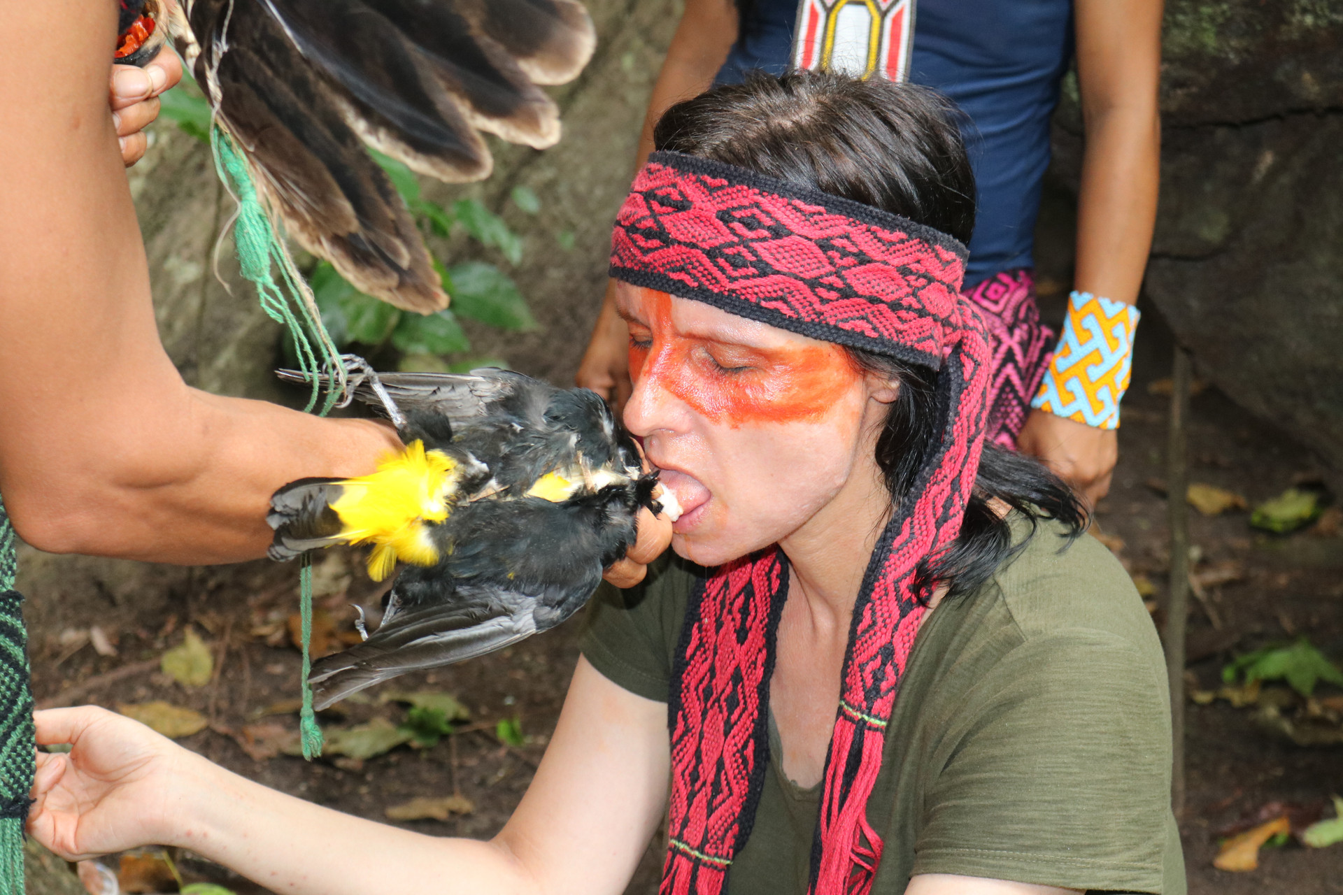 While sitting on one of the thick roots of the Samaúma tree, I have to open my mouth and stick out my tongue. The cacique wets the holy bird's beak with the ground red pepper and dabs it on my tongue for a few minutes, accompanied by another prayer. After that, the energy of the pepper medicine has to work on my tongue for 40 minutes.
