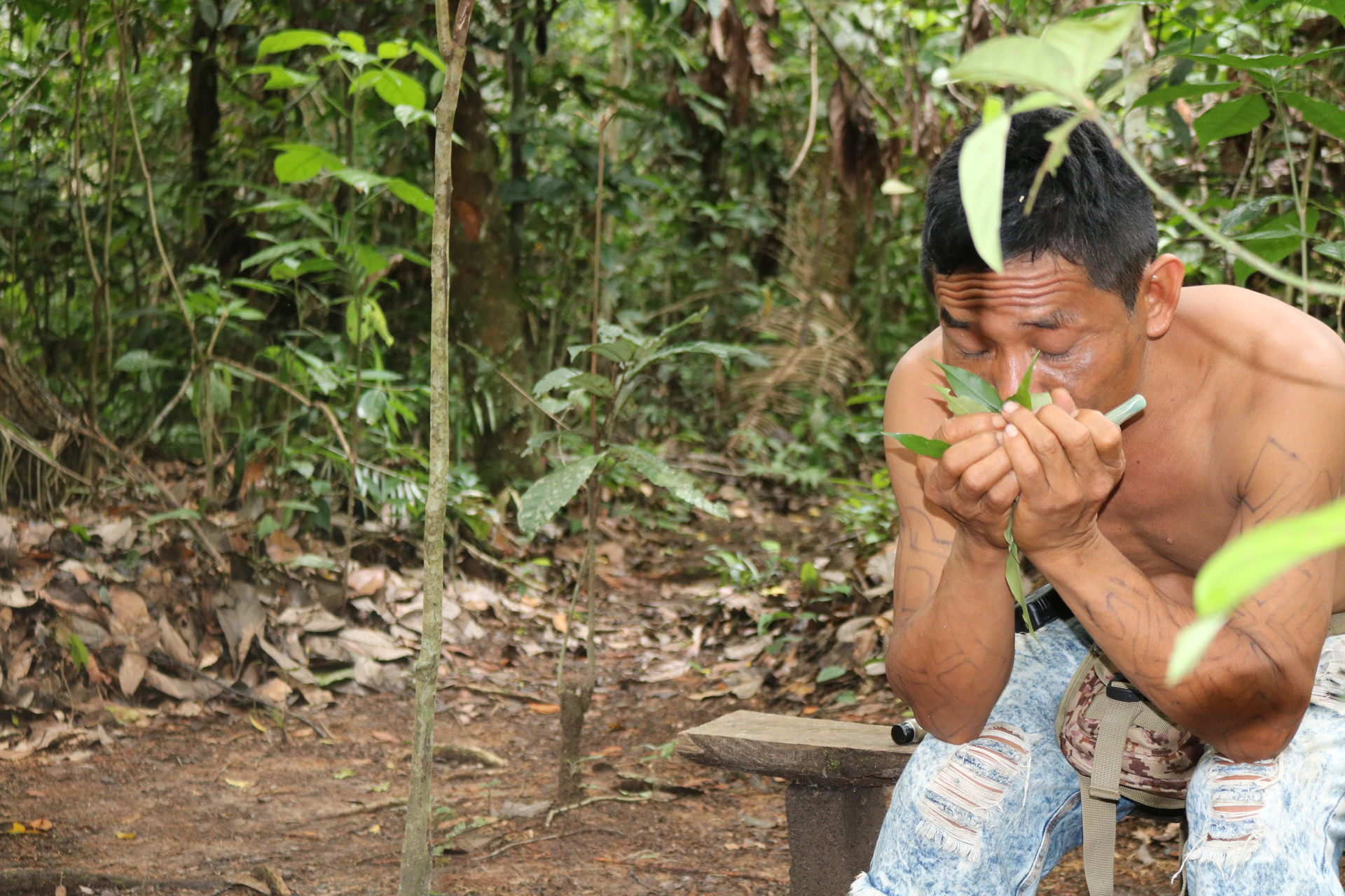 The forest is also a pharmacy for the people. Here they find medicines that relax and help against any sufferings, such as burns, problems during pregnancy, hair loss or even jealousy.