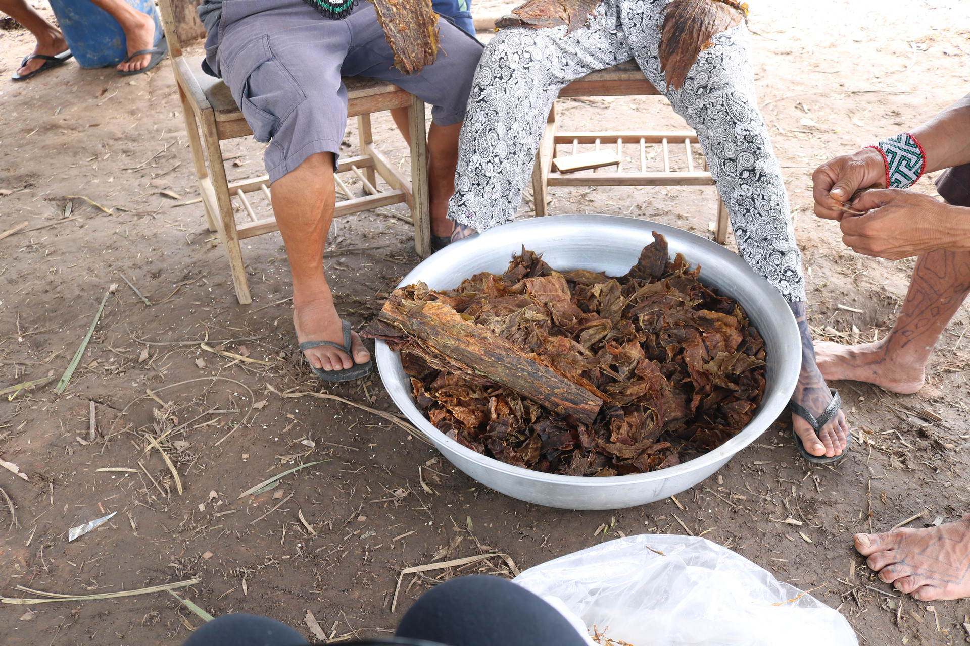 Preparation of the rapé medicine: The tobacco for the medicine is made by separating it from its stems.