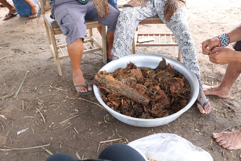 Preparação do rapé: O tabaco para a medicina é preparado separando-o dos seus caules.