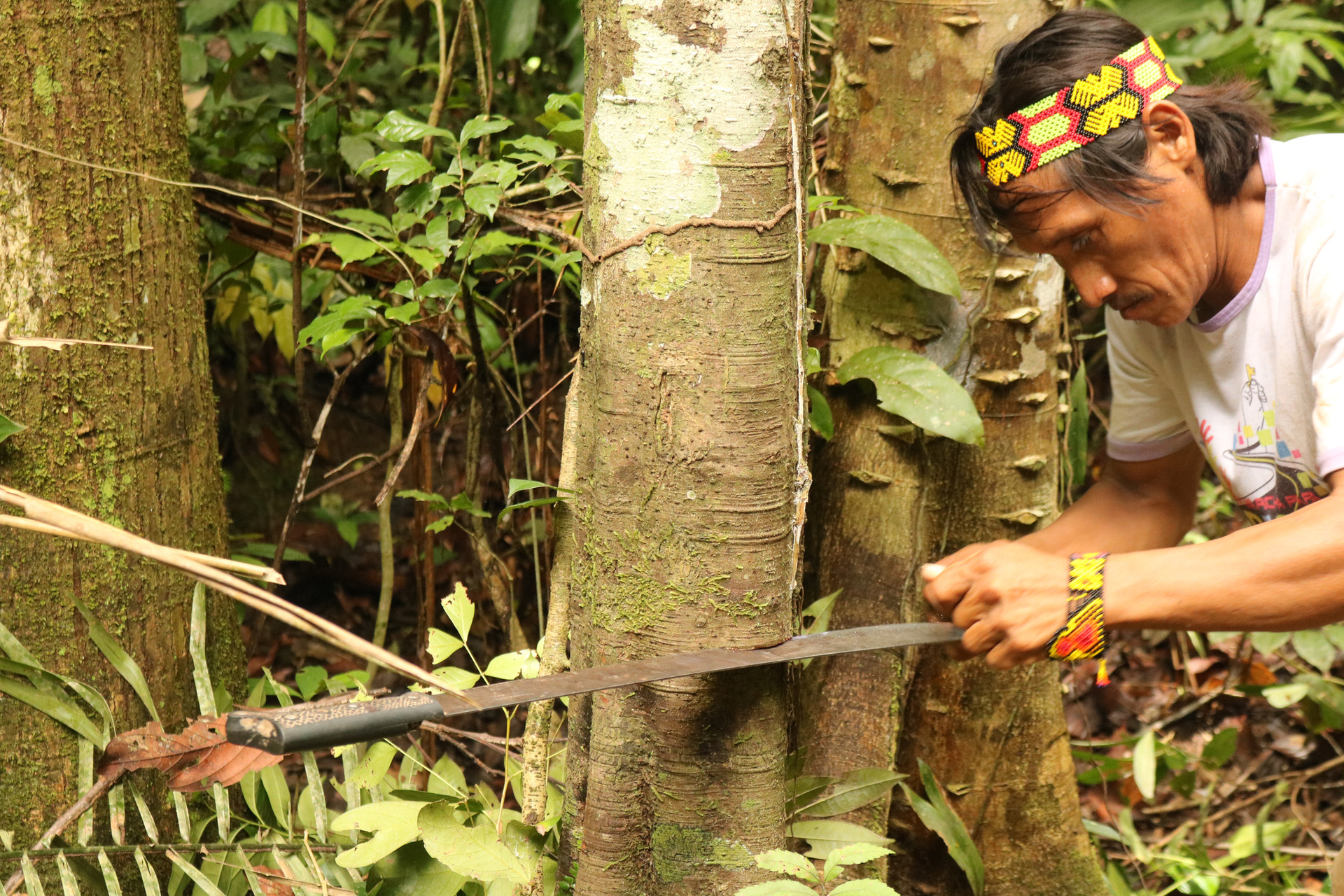 In the Amazon Rainforest