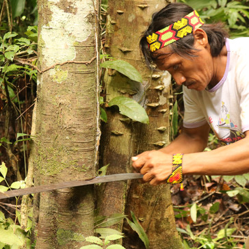 Gallery 2 - In the Amazon rainforest with the Huni Kuin people