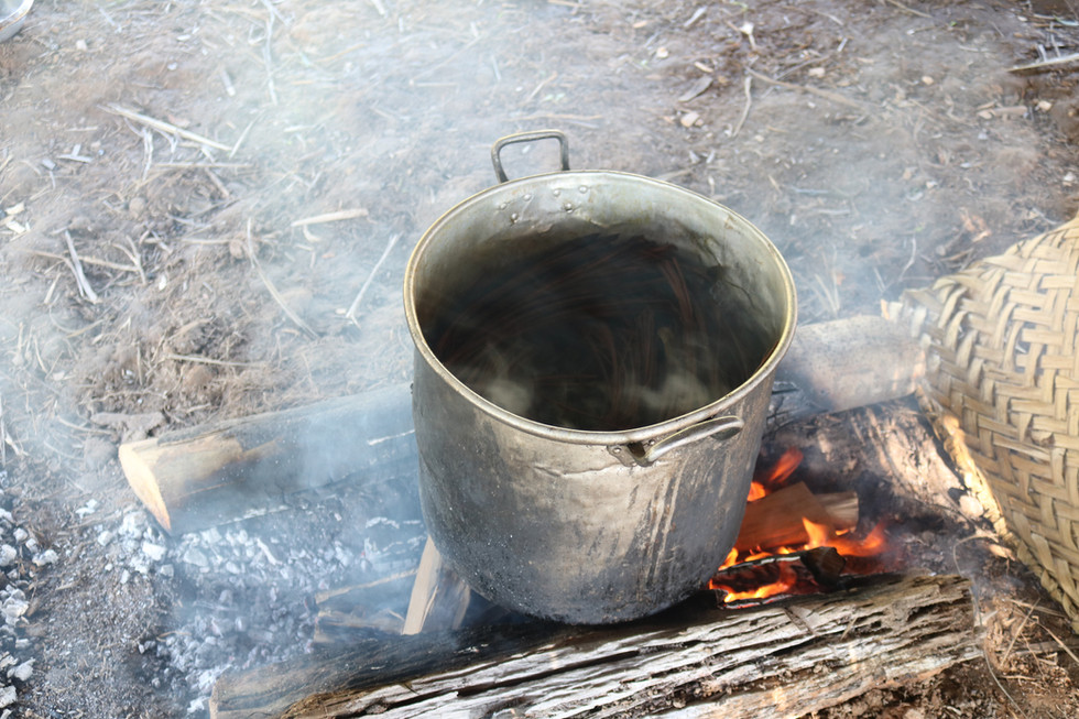 The two plants cook together to make the Ayahuasca medicine.
