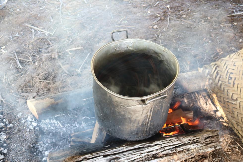 As duas plantas cozinham juntas para fazer a medicina da Ayahuasca.