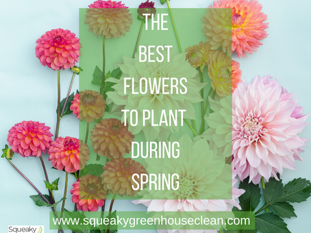The Best Flowers to Plant During the Spring