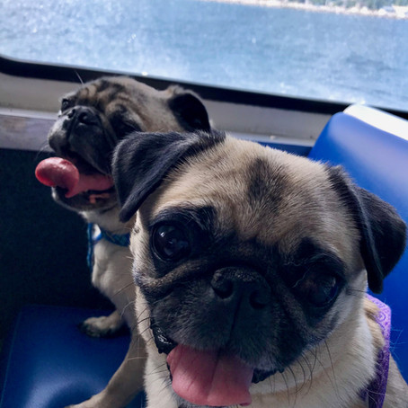 Bring your dog to Mackinac Island!