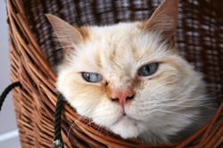 catcat2