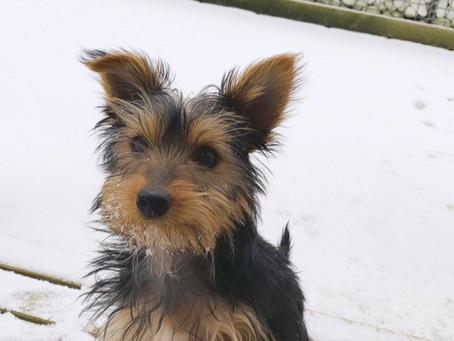 Rafy découvre la neige ❄