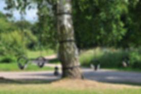 fermynwoods.jpg