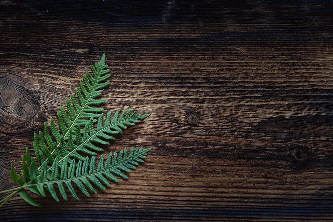 Holz : Zellulose.jpg