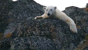 Find your castle and look out for the polar bear
