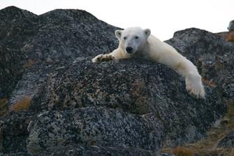 Obama weert oliebedrijven permanent uit Noordpoolgebied