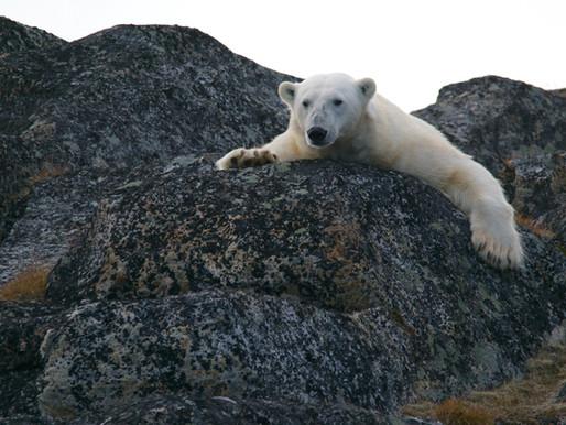 Kuzey Kutbu Beklenenden Hızlı Isınıyor