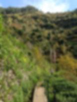 Madeira Residency Levadas