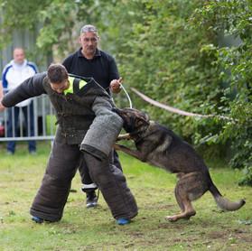 Dog attack - € 30,00 p.p.
