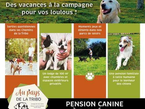 Pension canine Loire-Atlantique