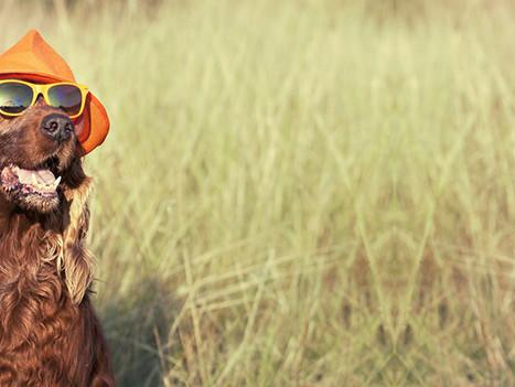 Pension canine 44 : Au Pays de la Tribo