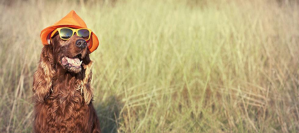 pension canine chateaubriant, pension canine 44, au pays de la tribo