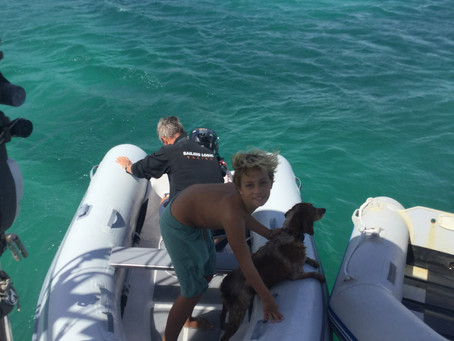 Cruiser's life - today's rescue mission!