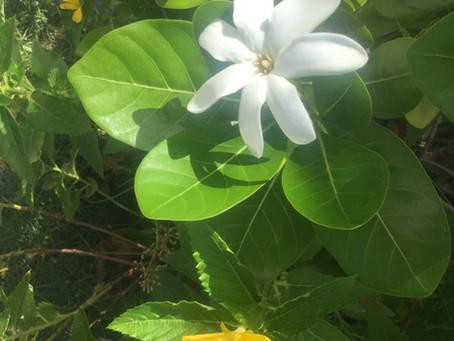 Fakarava flowers by Nina