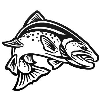 Full day - 8 hrs Salmon fishing