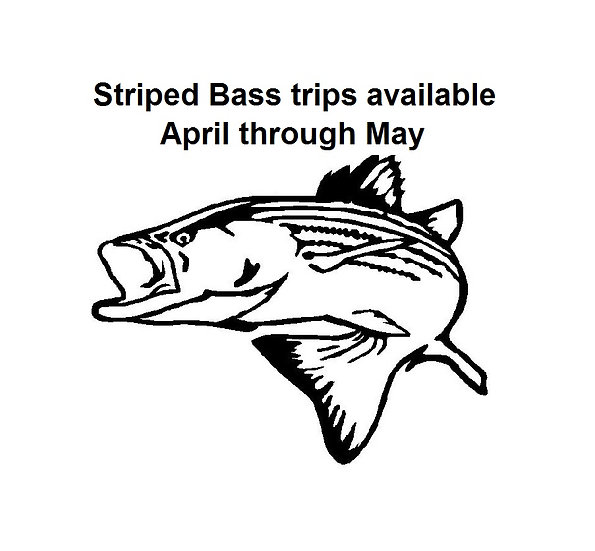 Half day - 5 hrs Striped Bass fishing