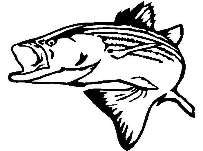 Half day - 5 hrs Striped Bass fishing
