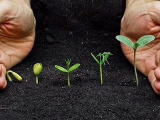 Para evoluir é necessário viver todas as fases