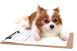 doggy-daycare-paperwork-300x200.jpg