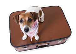 what-to-pack-for-your-dogs-boarding-stay