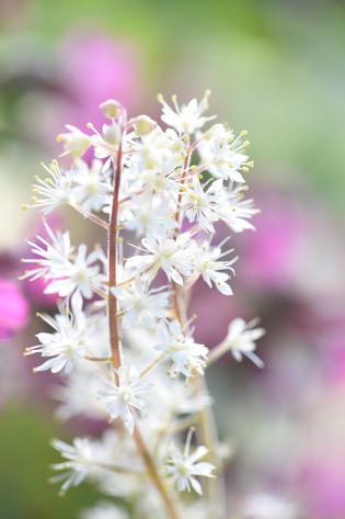 Journées des plantes rares