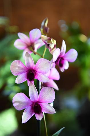 Journées des plantes rare