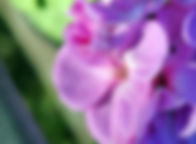 Journées des planes rhones alpes lyon beaujolais