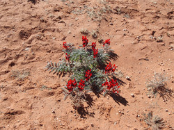 desert hike 324