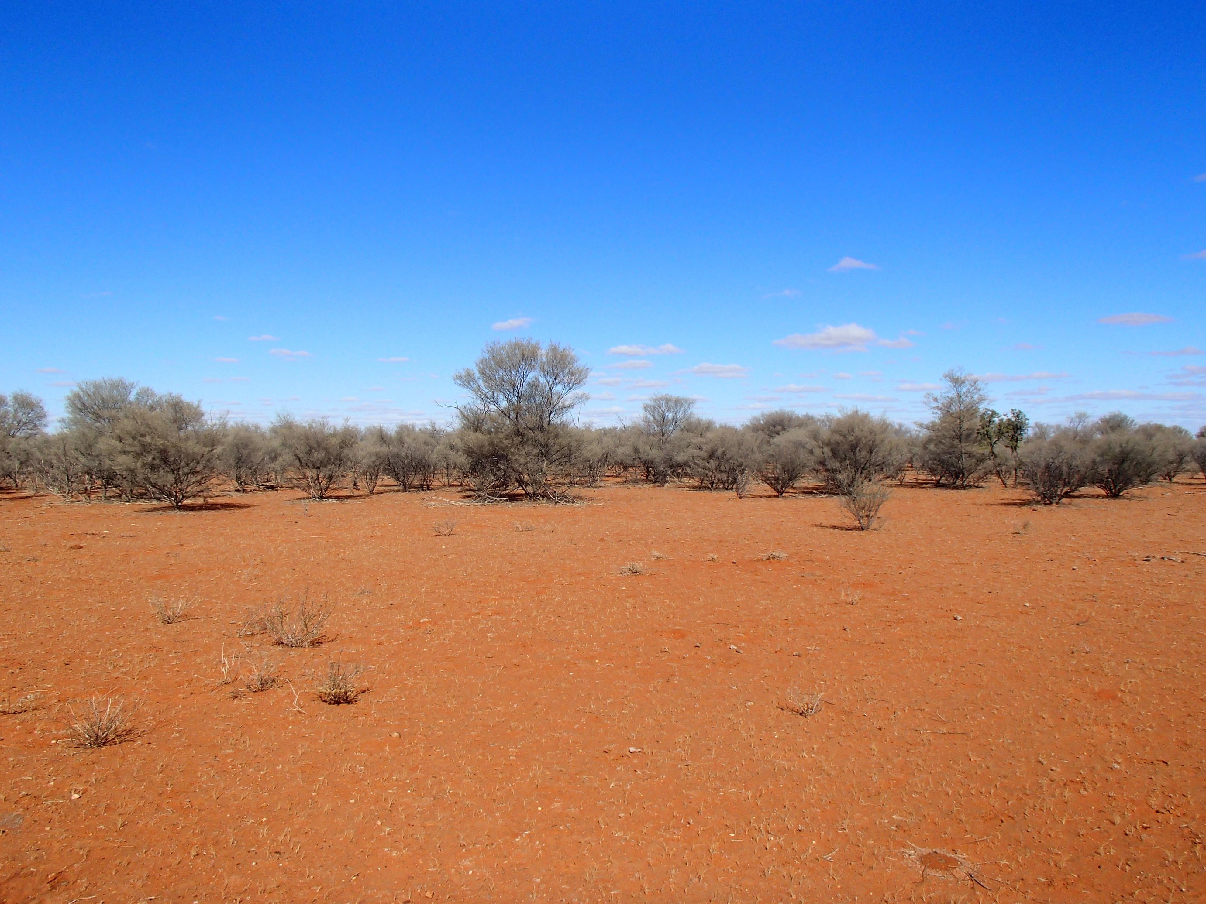 desert hike 165