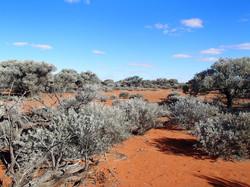 desert hike 169