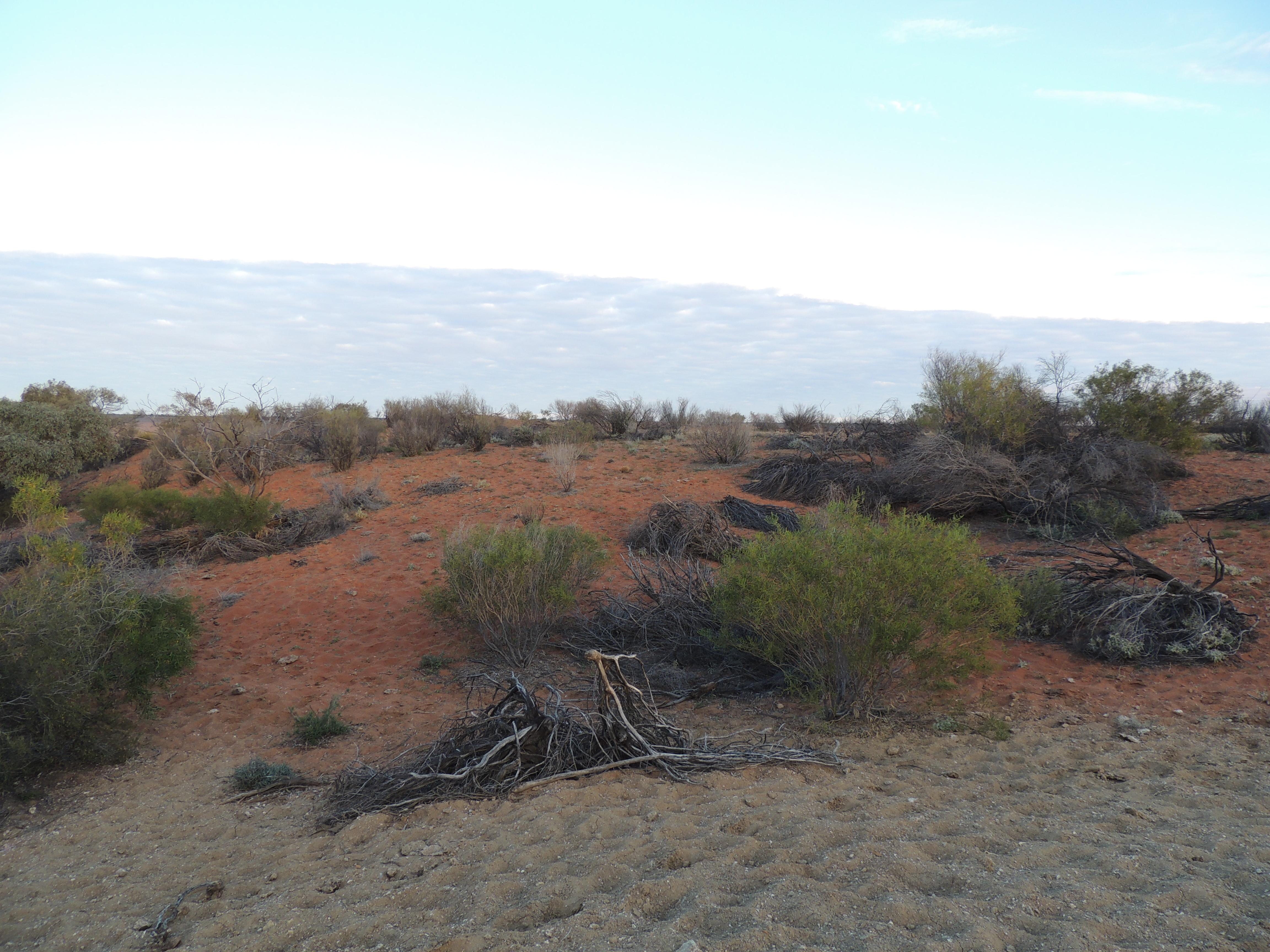 desert hike 041