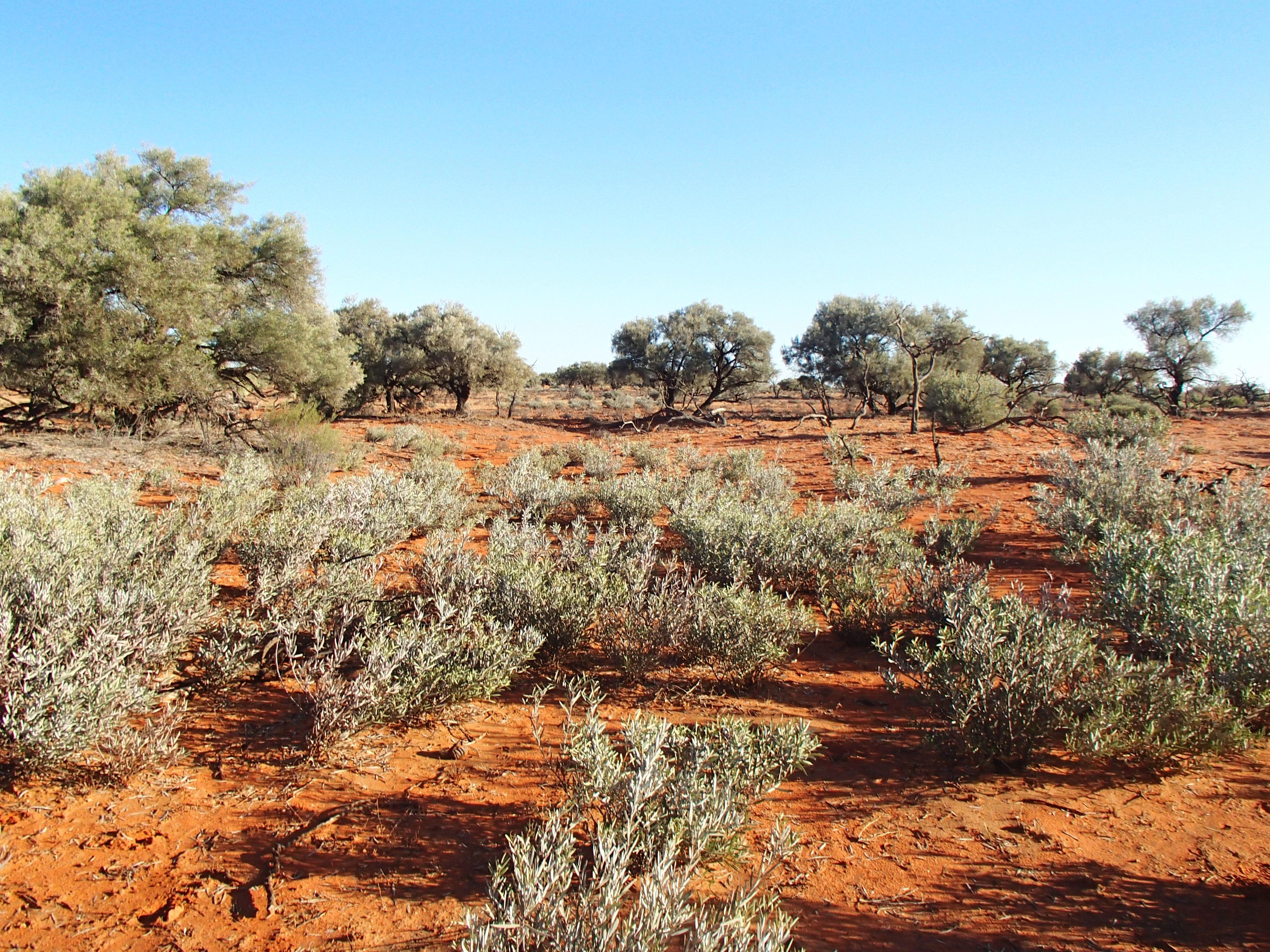 desert hike 181