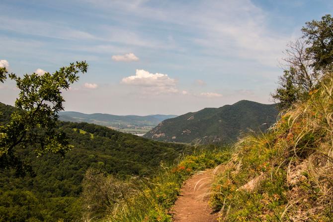 Spartacus-ösvény – Apát-kúti völgy körút