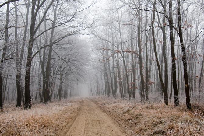 Kirándulás a Valkói erdőben