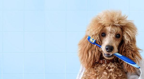 veterinaria, veterinario_sotogrande, clínicaveterinaria, perros, gatos, animales_de_compañia, urgenciasveterinarias, urgencia,diarrea, vomito, intoxicacion, veneno perro,  vacunas, limpieza_dental, limpieza_de_boca, sarro, halitosis