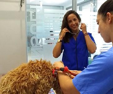 veterinaria, veterinario_sotogrande, clínicaveterinaria, perros, gatos, animales_de_compañia, urgenciasveterinarias, urgencia,diarrea, vomito, intoxicacion, veneno perro,  vacunas