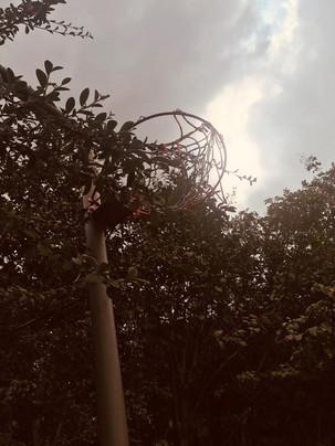 Love netball