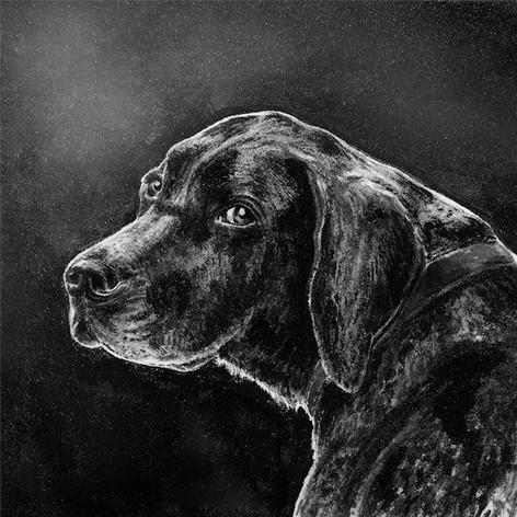 Hund_Flavia_96.jpg