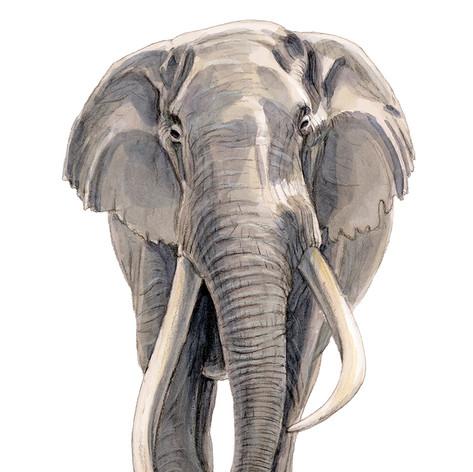 Elefant_klein.jpg