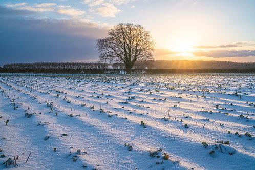 Snowy golden hour