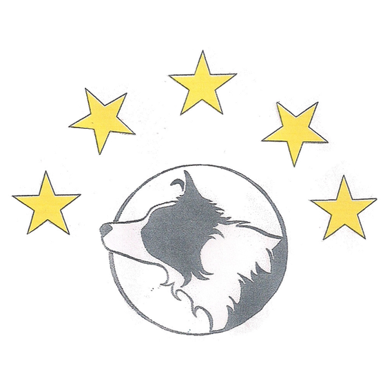Dog Training Classes with All Stars Dog Training Club