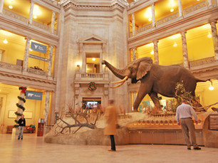 Elephant Rotunda