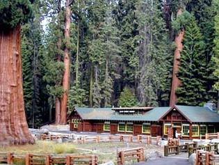 Saving Sequoias