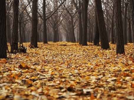 気分の落ち込みを吹っ飛ばせ!秋モードにうまく切り替え、気分をアゲる5つの方法